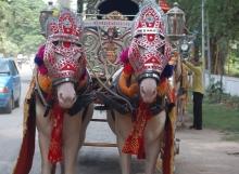SILVER BAGI by Malataj Bagiwala Gujarat