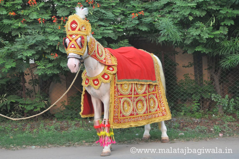 SINGLE HORSE by Malataj Bagiwala