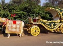 Patiala Green Bagi by Malataj Bagiwala Anand